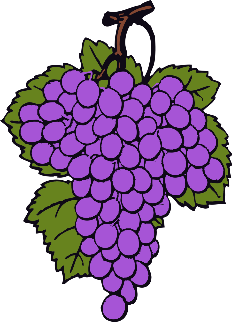 clipart royalty free library Public domain clip art. Grapevine clipart artwork