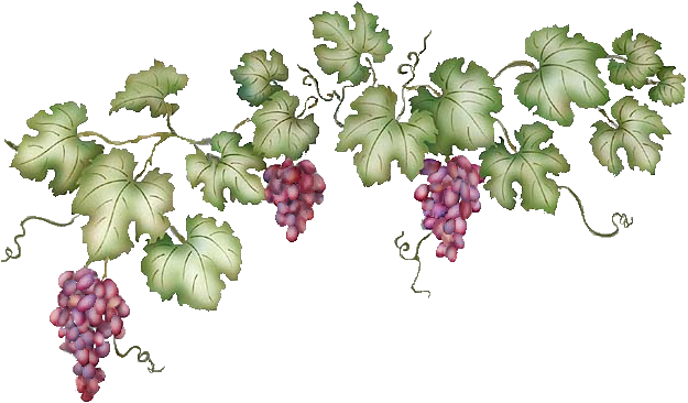 banner freeuse stock Png photo this was. Grapevine clipart banner