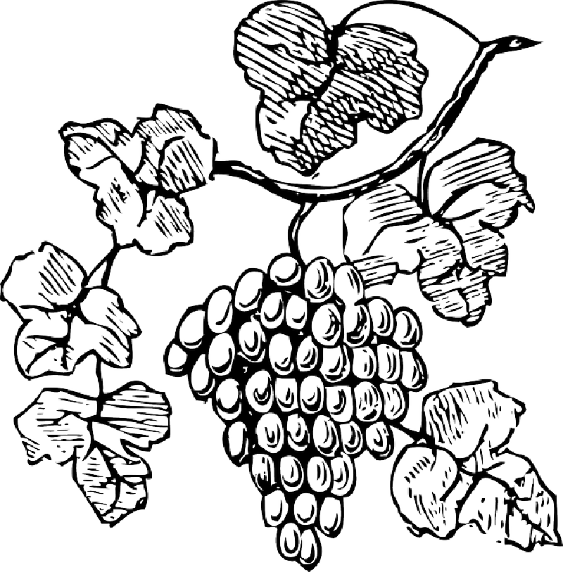 clip art freeuse download Drawing at getdrawings com. Grapevine clipart grape stomping