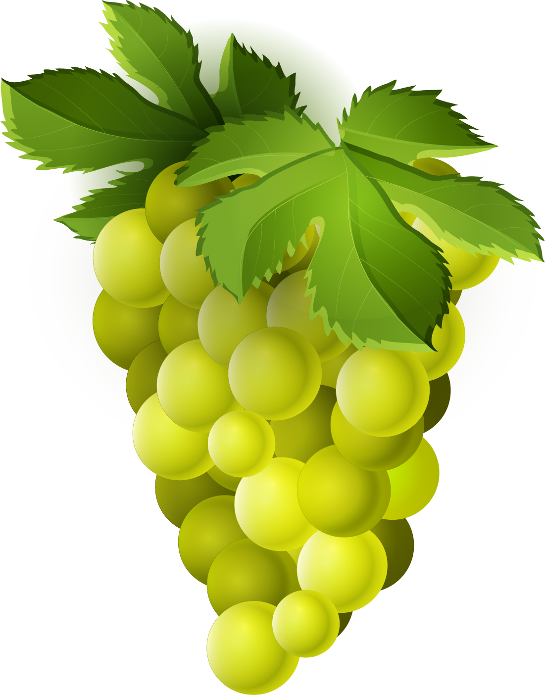 clip freeuse download Grapevine clipart grape stomping. Png transparent free images
