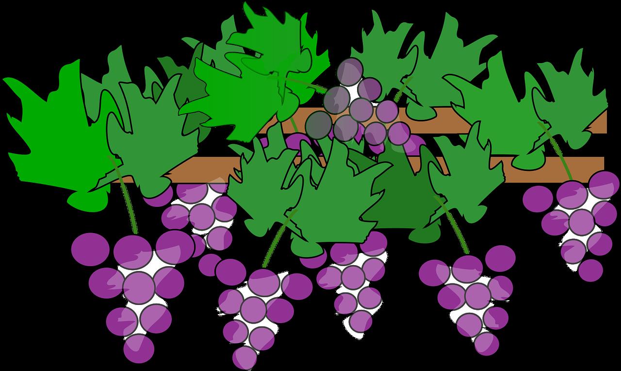 png black and white Grape vine suzanne bratcher. Grapevine clipart greps