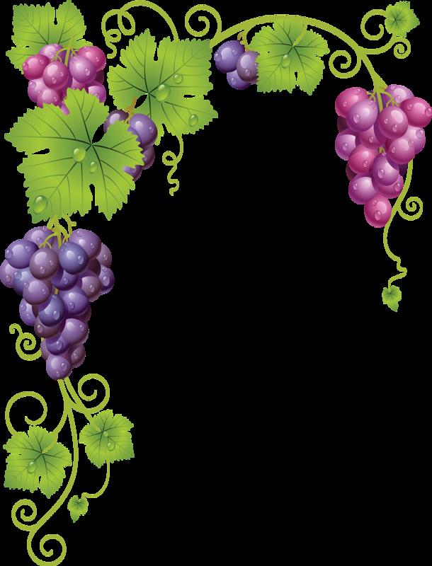 graphic transparent Common grape vine wine. Grapevine clipart greps