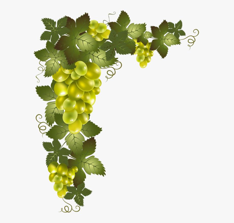 freeuse library Grapevine clipart greps. Clip art grape vine.
