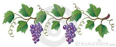 clipart library download Grapevine clipart greps.  grape vine clip.