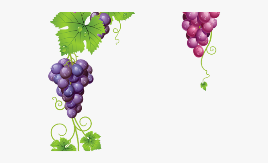 png download Grapevine clipart greps. Free transparent background .