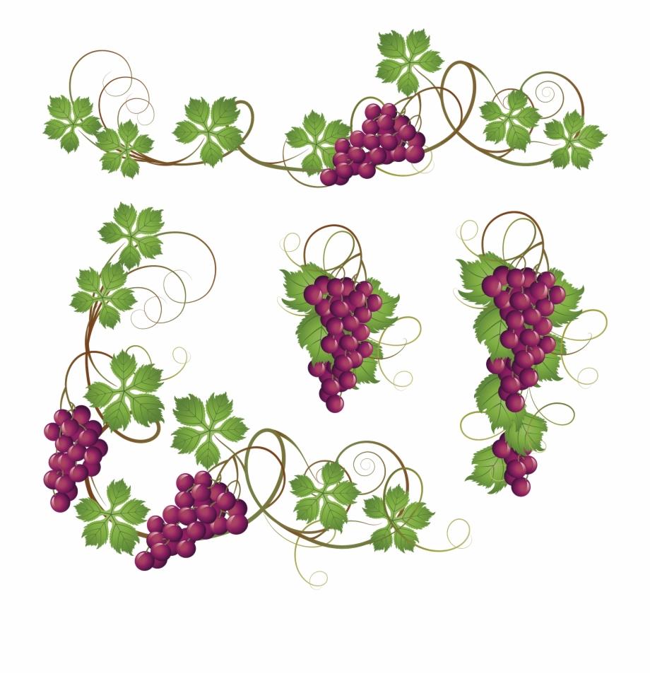 svg freeuse stock Common grape vine clip. Grapevine clipart greps.