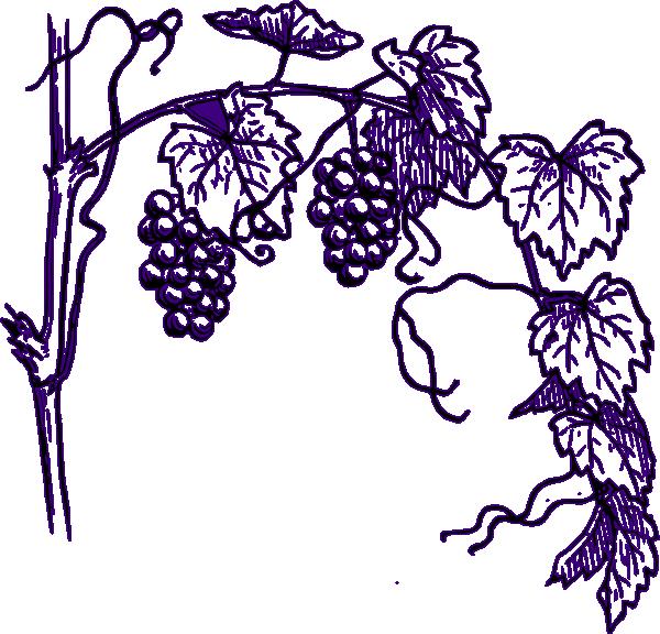 clip black and white stock Grapevine clipart greps. Purple grape vine clip