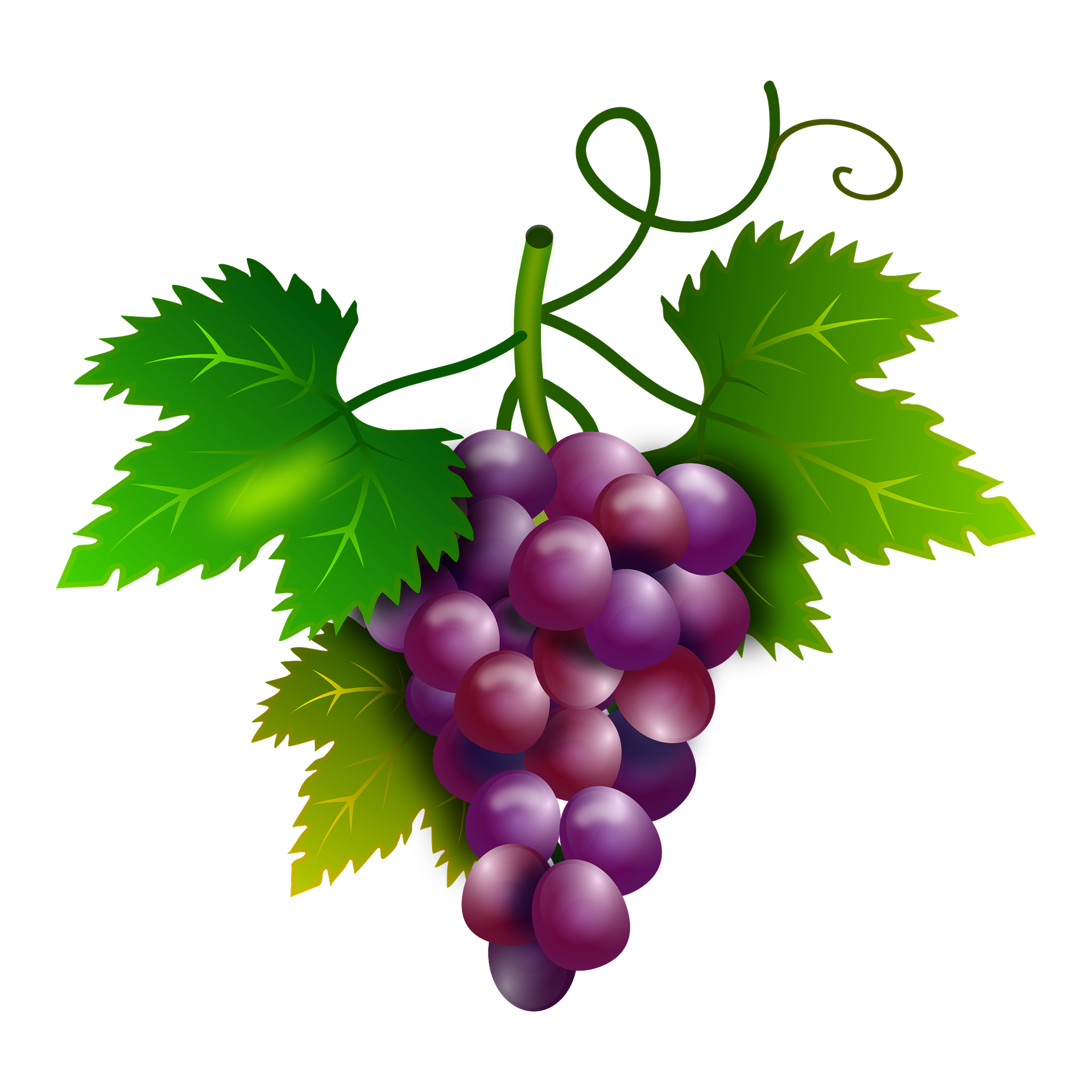 banner transparent download Grapes free on dumielauxepices. Grapevine clipart purple food