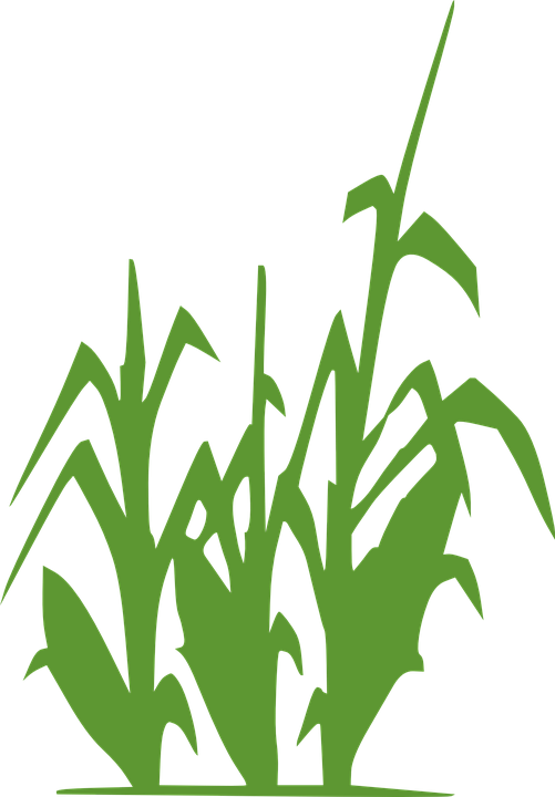 clip black and white stock Green free on dumielauxepices. Grapevine clipart wheat
