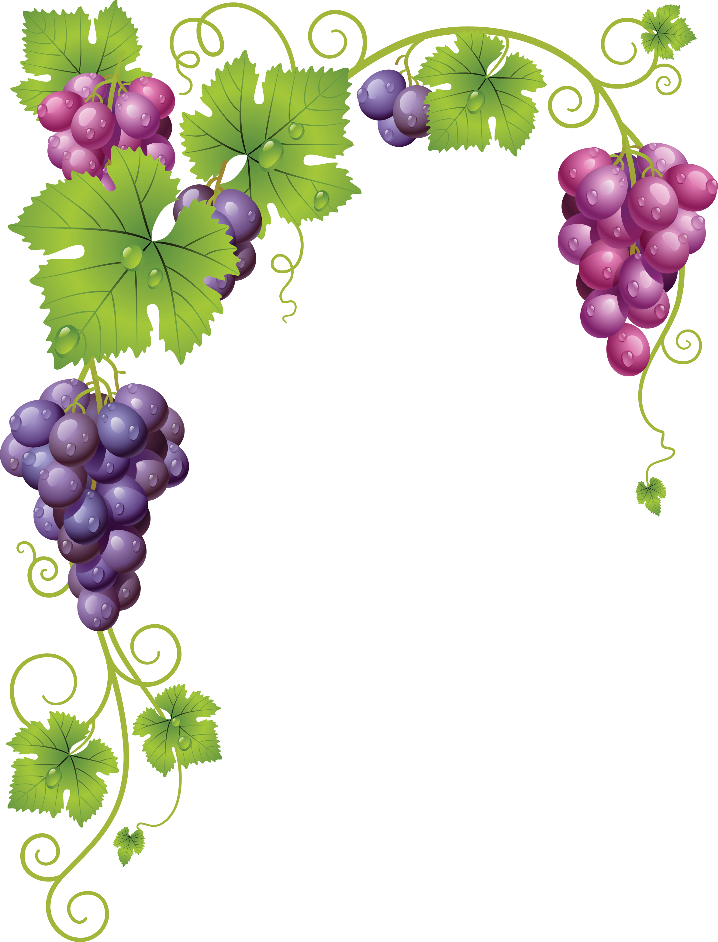 picture library download Grapevine clipart wine grape.  af c f