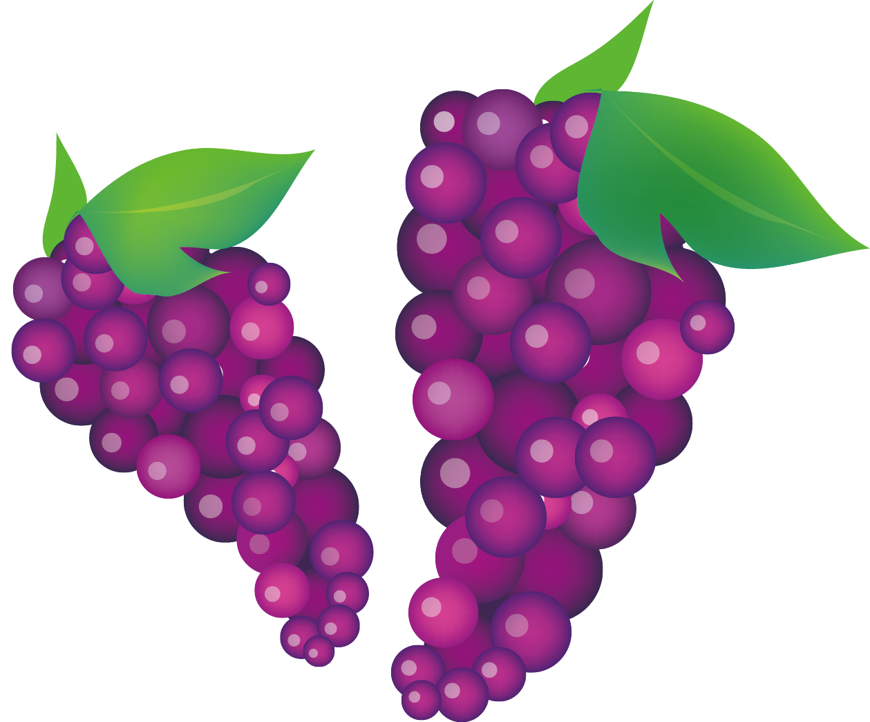 jpg freeuse Common vine clip art. Grapevine clipart wine grape