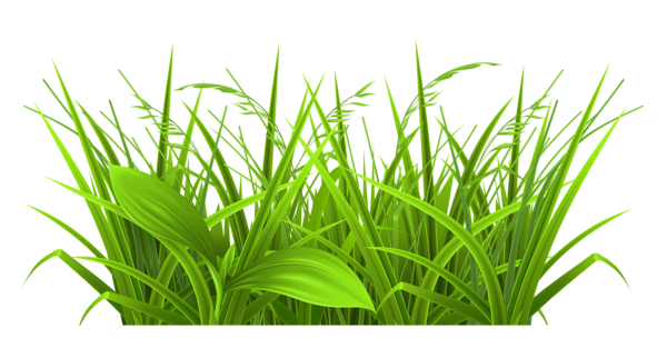image Grass clipart. Decorative png picture gallery