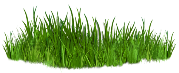 picture Grass clipart fodder.  png pinterest grasses