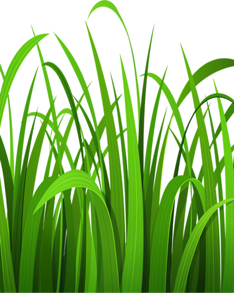 picture library stock Arizona region of usa. Grass clipart volleyball