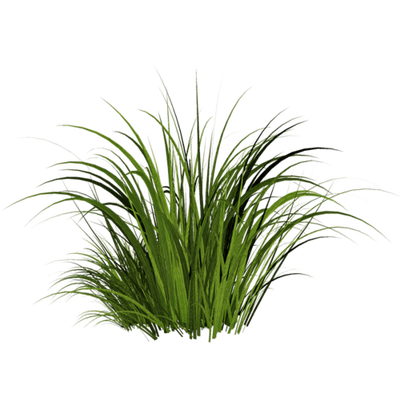 clip art transparent download Grass patch clipart. Transparent png stickpng