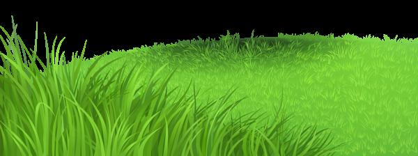 picture transparent download Grass patch clipart.  png pinterest grasses
