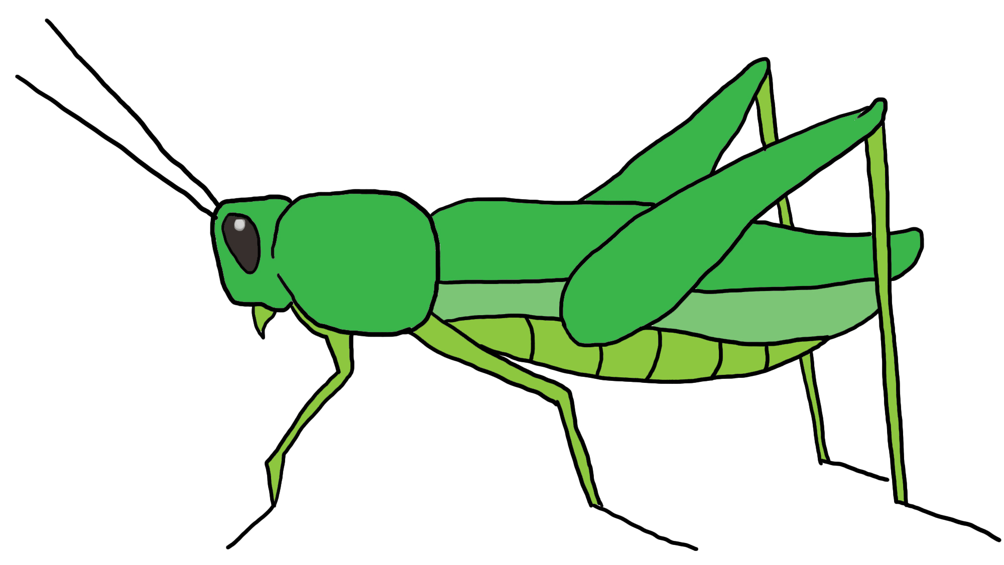 clip art freeuse Best clipartion com . Grasshopper clipart.