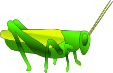 image freeuse Grasshopper clipart. Images panda free clip