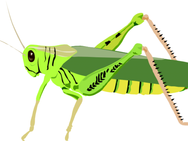 clip art transparent download Free on dumielauxepices net. Grasshopper clipart.