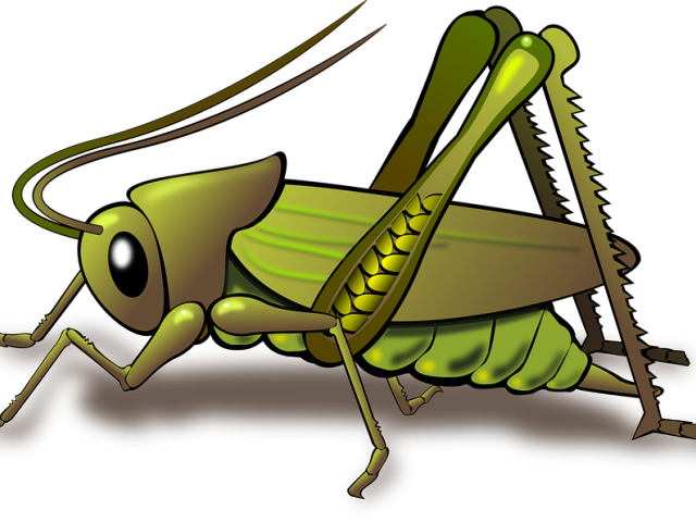 image royalty free Grasshopper clipart. Free on dumielauxepices net.