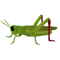 png free download Png clip art images. Grasshopper clipart
