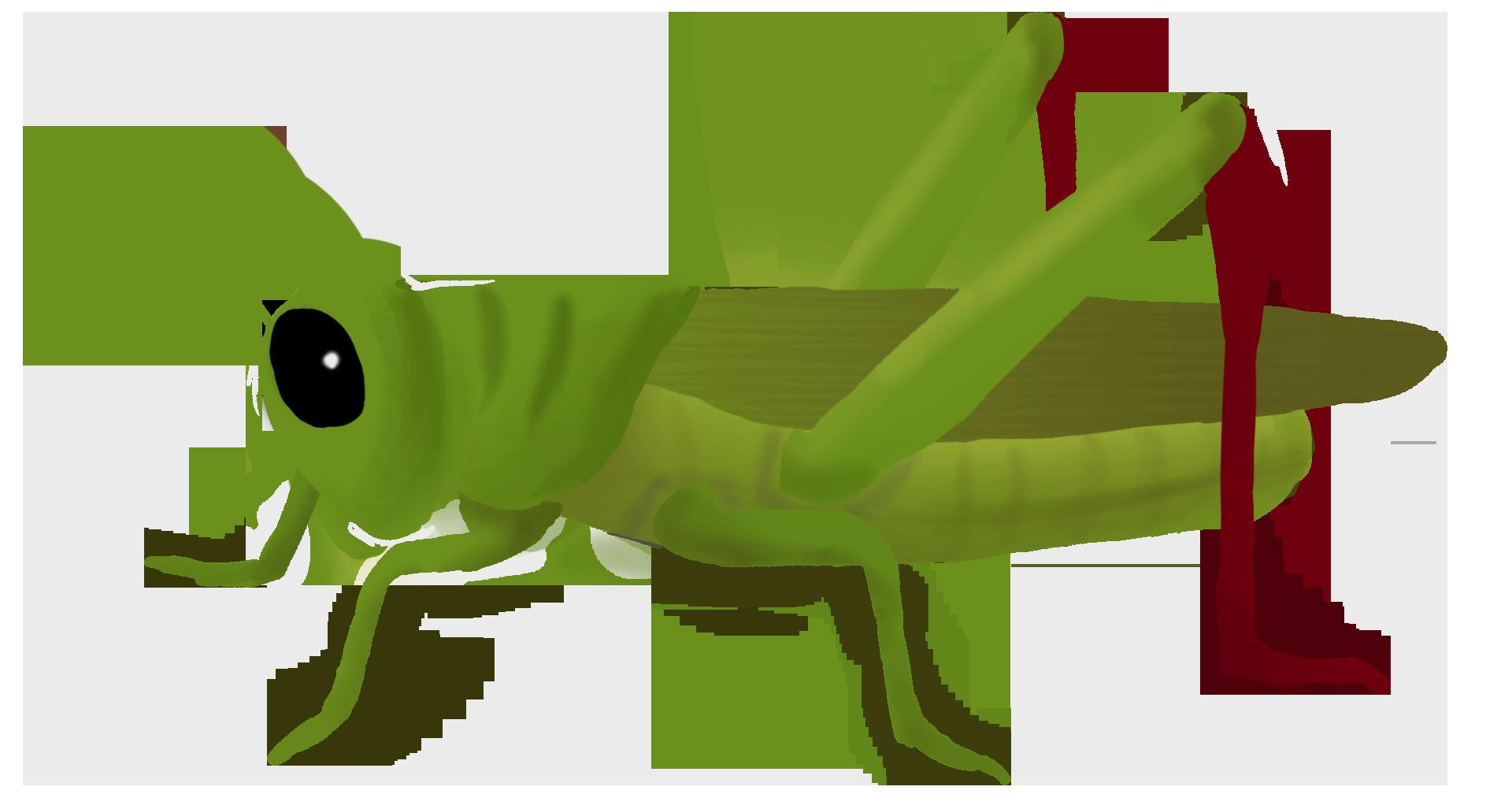 jpg freeuse download Grasshopper clipart border. Png mart