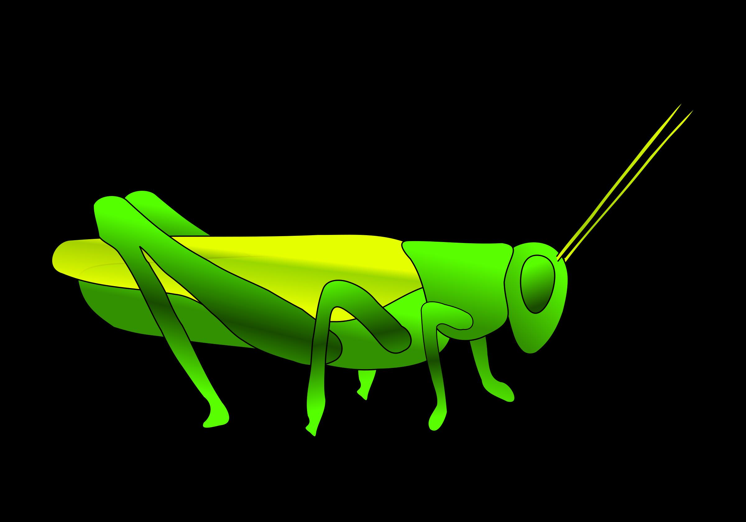 image black and white download . Grasshopper clipart invertebrate