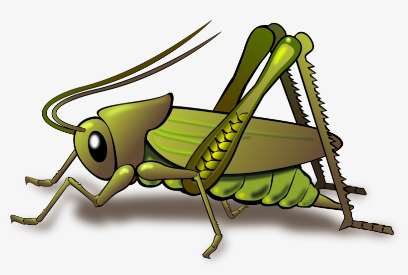 png free download Insect cricket like locust. Grasshopper clipart invertebrate.