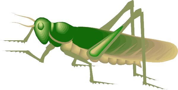 picture free Png images free download. Grasshopper clipart invertebrate