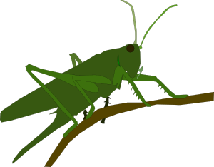banner freeuse download Grasshopper clipart jumping. For free