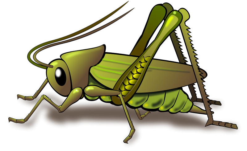vector free library Images of crickets google. Grasshopper clipart painting