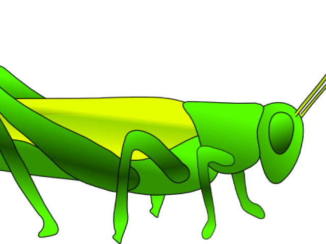 picture royalty free library Free on dumielauxepices net. Grasshopper clipart primary consumer