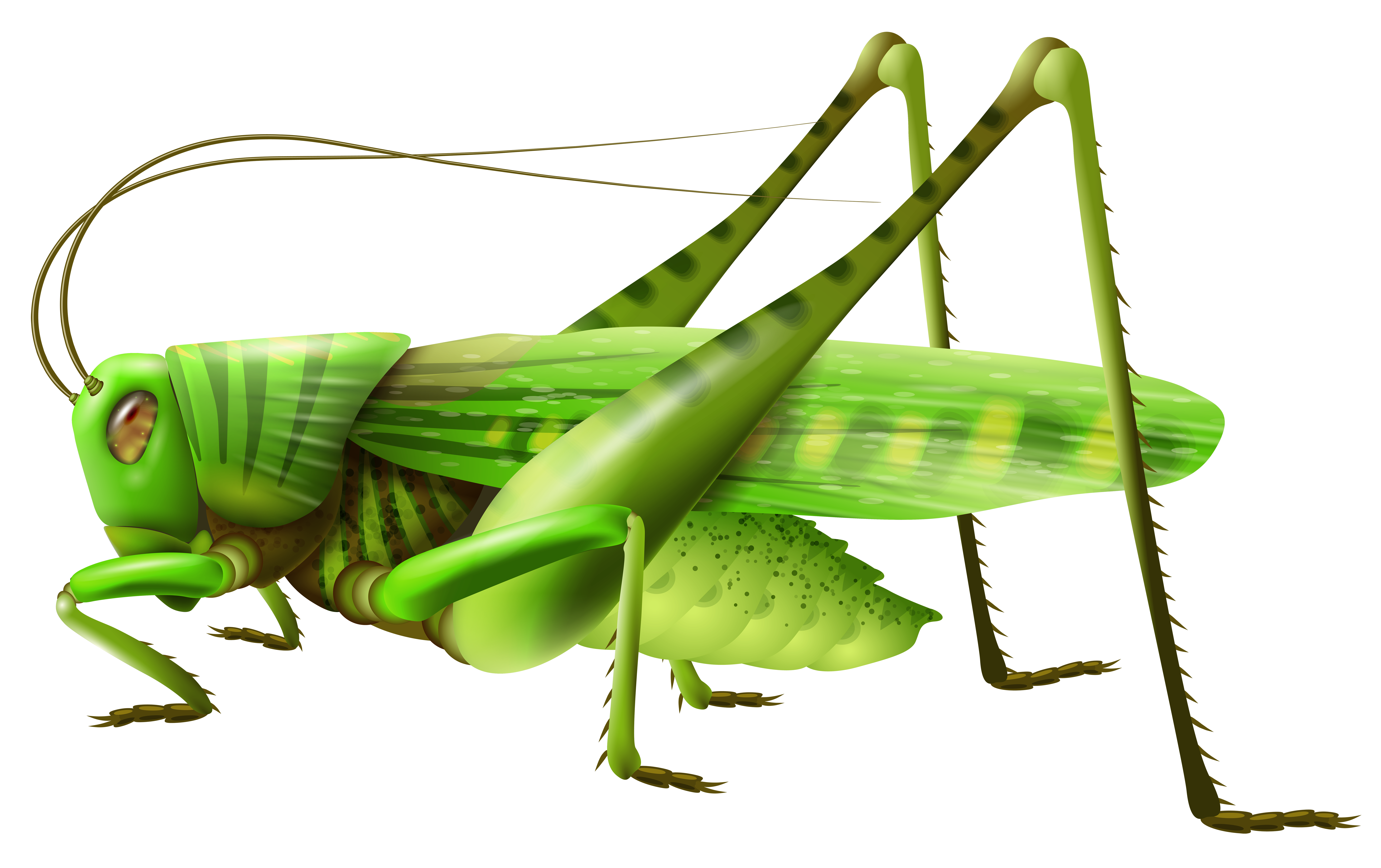 clipart free download Grasshopper PNG