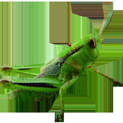 svg download Png images free download. Grasshopper clipart transparent