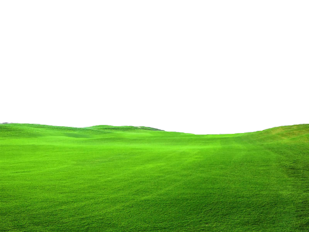 graphic transparent stock Green Grass PNG FILE