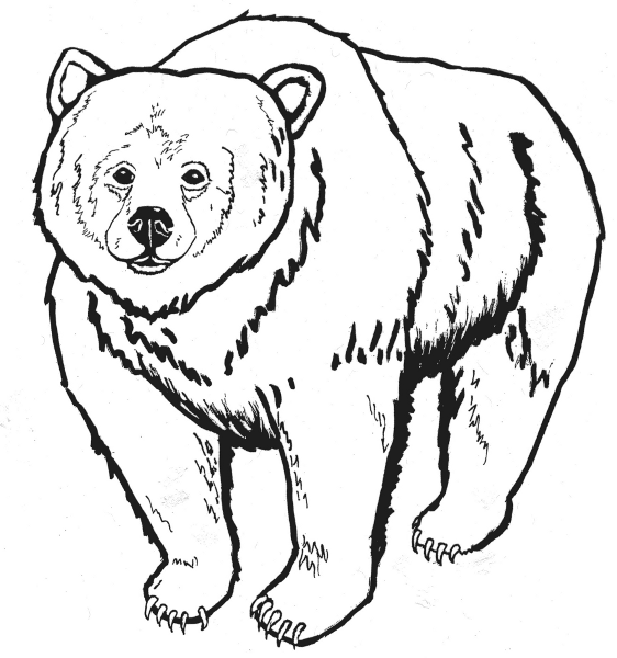 graphic royalty free Wikiclipart . Grizzly bear clipart black and white