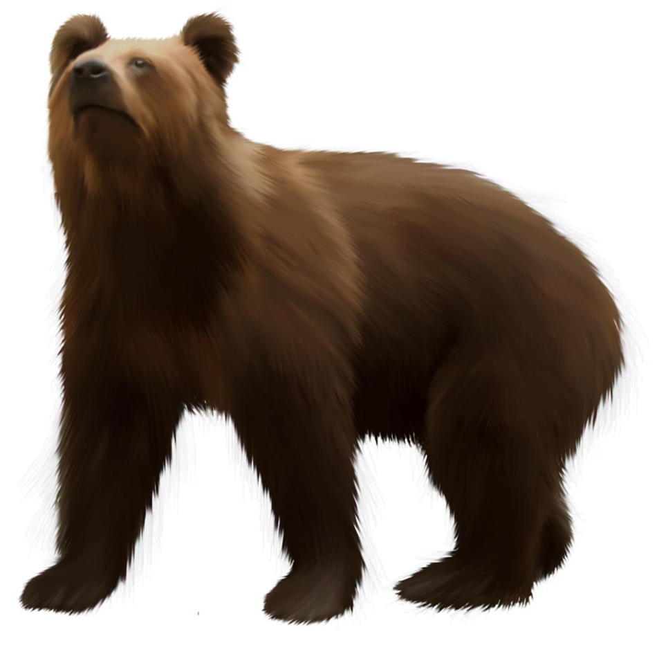 png download Grizzly clipart clip art. Bear brown png best