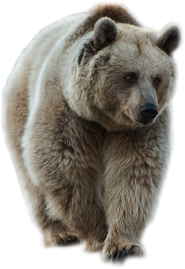 svg free Brown by lovemayu on. Grizzly clipart wild bear