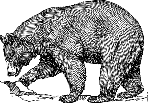 graphic library download Grizzly clipart wild bear. Black clip art open
