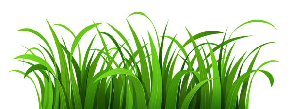 vector royalty free Ground clipart grass patch. Png gallery yopriceville high