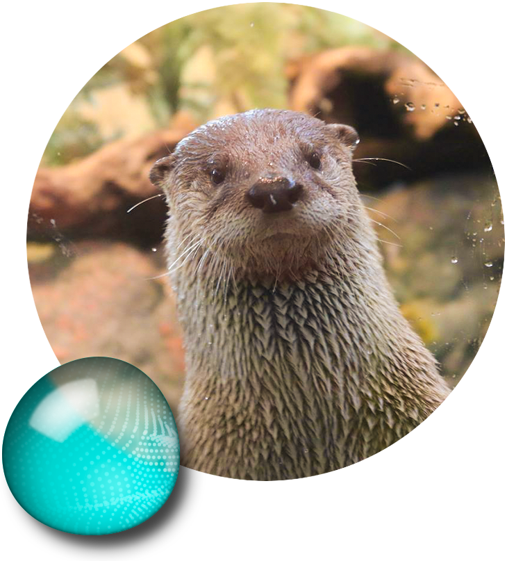vector freeuse download Groundhog clipart otter. Mongoose river free on