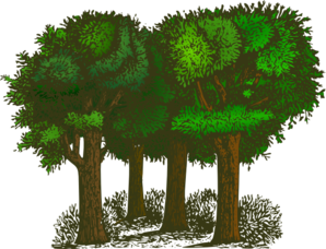 image royalty free download Group clipart bunch. Of trees clip art