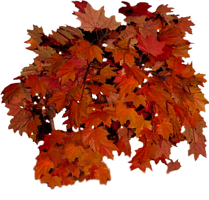 transparent library Fall leaves clip art. Leaf clipart bunch.