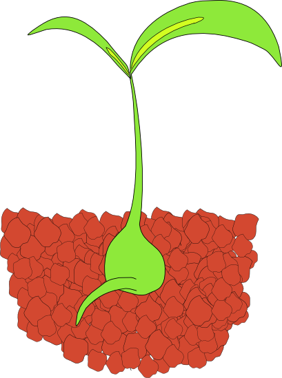 banner transparent Growth clipart plant. Free graphics of plants
