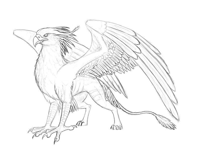 clipart freeuse library Izora by beast deviantart. Gryphon drawing