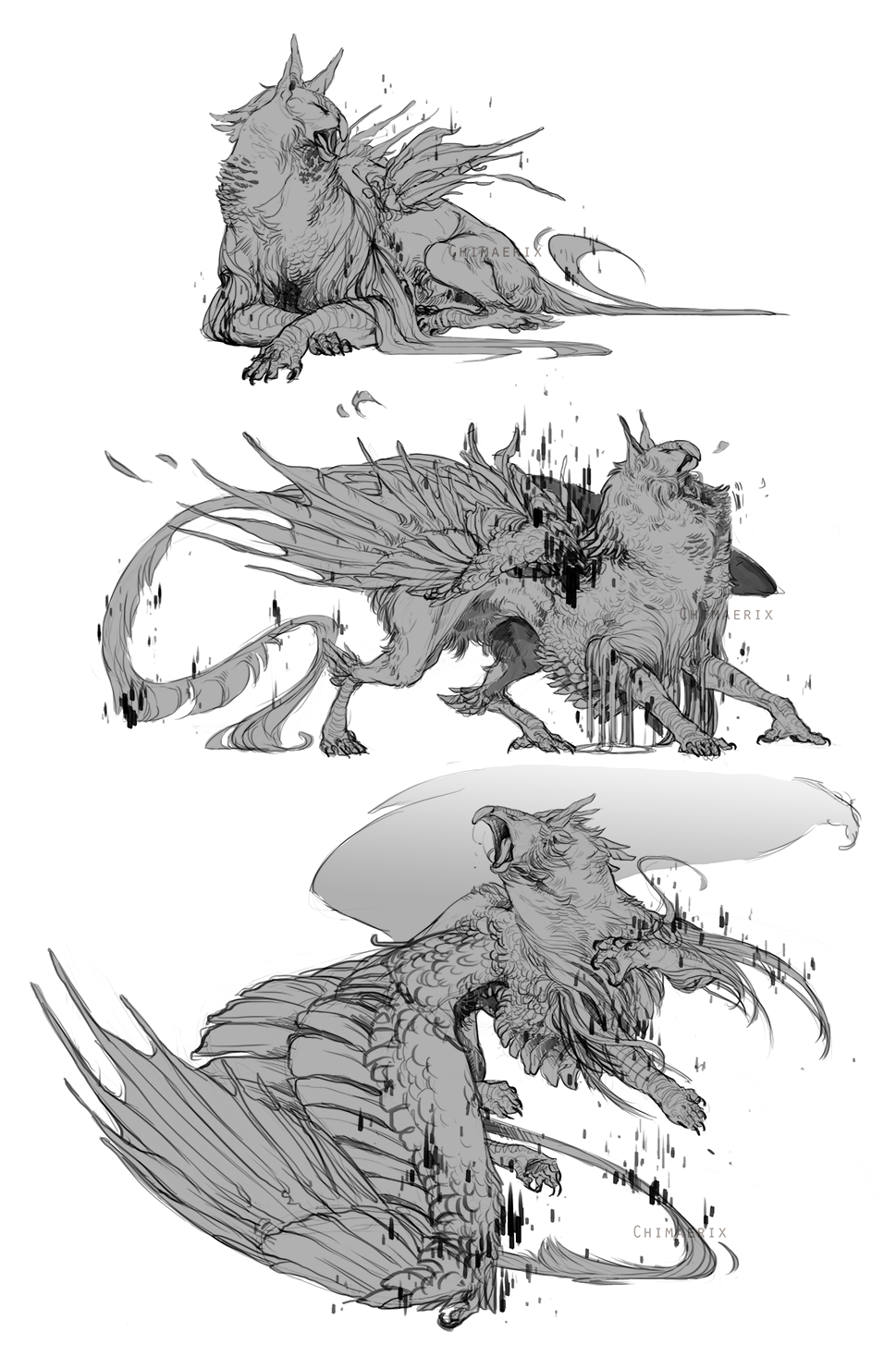 png black and white Gryphon sketches for Sharkfu by Tawnwen
