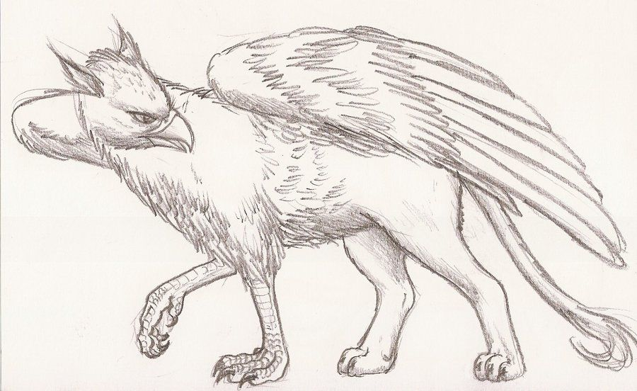 jpg free download Gryphon drawing. Griffin drawings downloads wowow