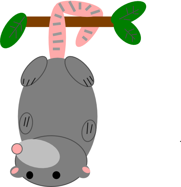 svg royalty free library Guinea clipart. This cute possum clip