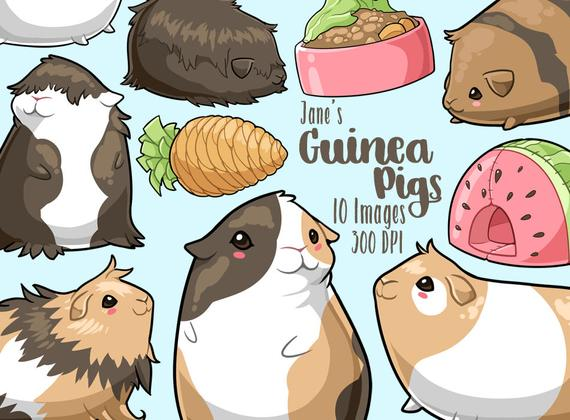 picture free stock Guinea clipart cute. Kawaii pigs rodents download