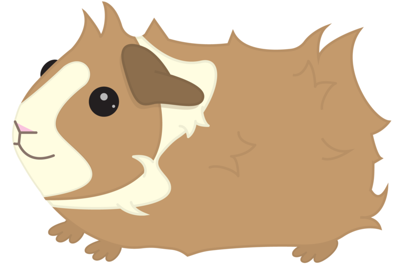 clipart royalty free library Contact me piggies designs. Guinea clipart guinea pig